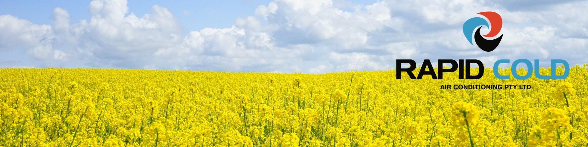 allergies spring